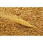 Пшеница мягкая 3 класс на экспорт