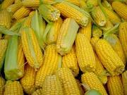 кукуруза в початках (Тулпар 539)