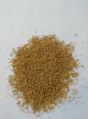 Продаем семена горчицы Сарепта урожай 2015 года 200 тонн/биг бег