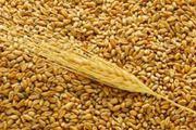 Пшеницу