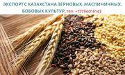 Крупным оптом продаем зерновые,  масличные и бобовые культуры